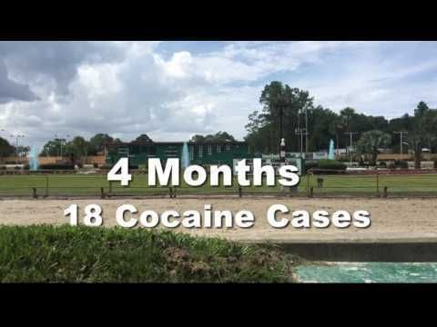 Did you know that racing dogs test positive for serious drugs, including cocaine?    Last night,ABC First Coast News revealed that there were  18 cocaine positives at Florida's Orange Park dog track  over the first seventeen weeks of 2017. An  Associated Press story  followed.   A dog named Flicka...
