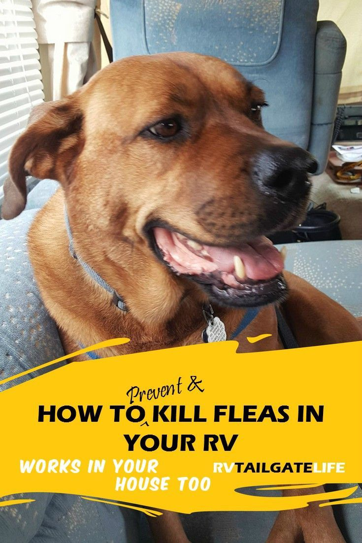 Prevent And Kill Fleas In Your Rv Rv Tailgate Life Fleas Pet Travel Life