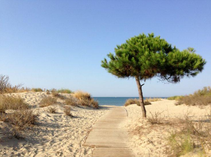 Camino del mar (Isla Cristina, Huelva) - Uno de los accesos a la playa más agradable que puedas imaginarte. Después de un paseito por el pinar, la inmensidad del atlántico