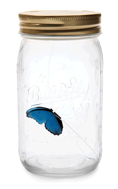 The Butterfly in a Jar is an electronic beauty to keep on your desk or bookshelf. It can make a great gift for office desk that everyone will love to have.