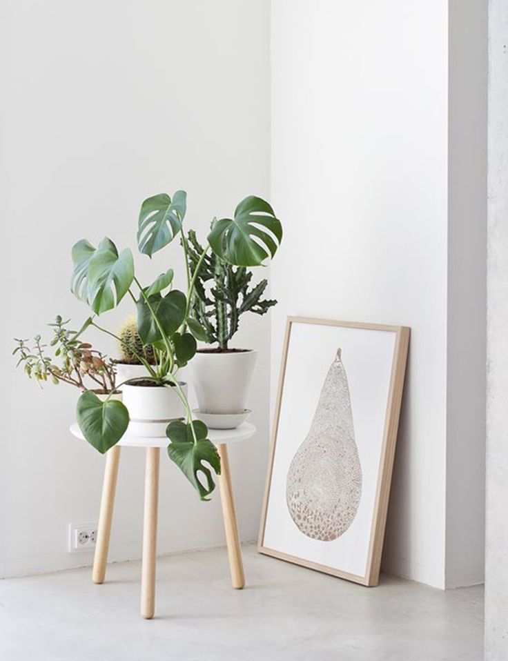 30 times an indoor plant added magic to an interior | Homes To Love