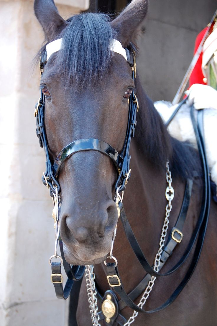 Queen's Horse