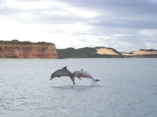 Dolphins come and play every day- Pipa, Brazil