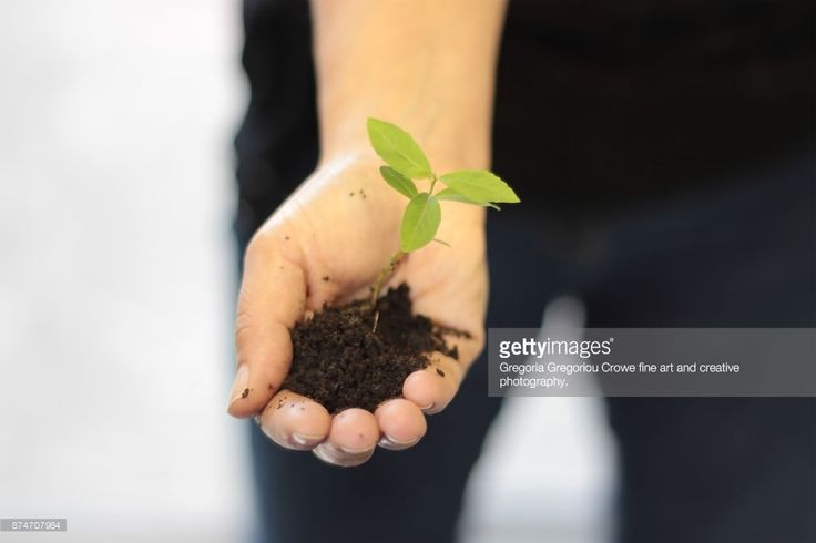 Close up image of a young woman holding a seedling with much care for the protection of the environment. For the love of sensitivity in the environment and nature.