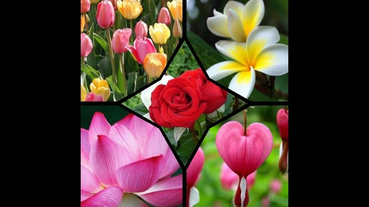 Top 10 Most Beautiful Flowers In the World 2016