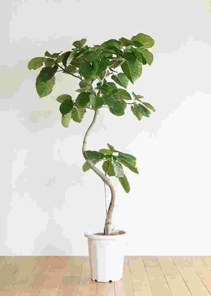 なにを選んで どう飾る 観葉植物の 置き方 選び方 育て方 のコツ キナリノ 観葉植物 室内 植物 飾る