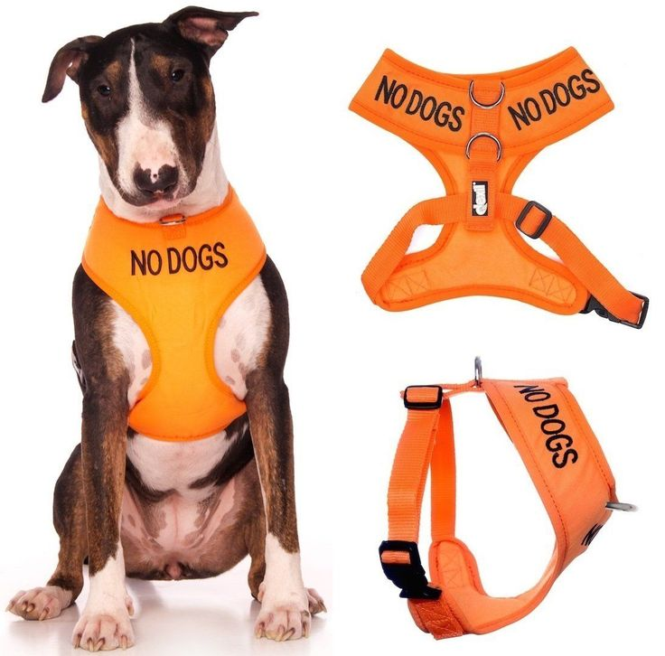 NO DOGS (Not good with other dogs) Orange Color Coded Non-Pull Front and Back D Ring Padded and Waterproof Vest Dog Harness PREVENTS Accidents By Warning Others Of Your Dog In Advance * Special  product just for you. See it now!(This is an affiliate link and I receive a commission for the sales) : Cat Collar, Harness, Leash