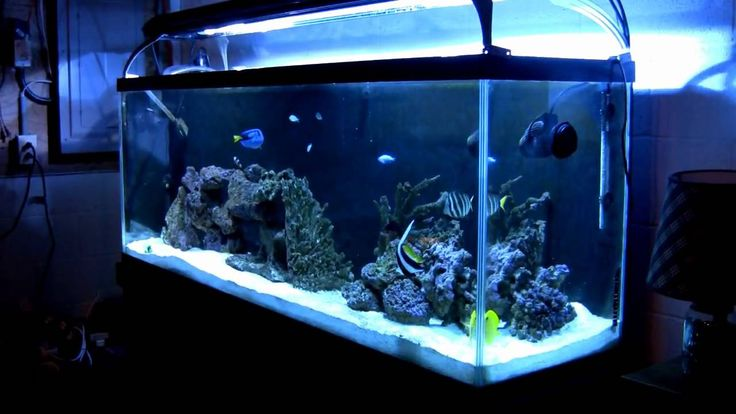 Complete Saltwater Aquarium Kit - How To Start A Saltwater Fish Tank