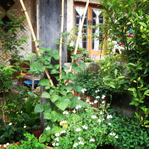 41 Best Images About Permaculture Design On Pinterest