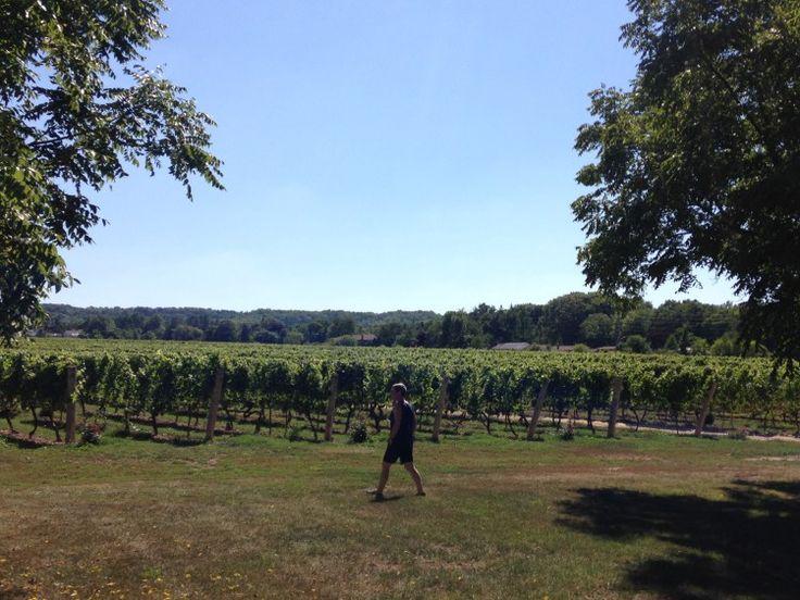 5 Reasons you should be buying more Niagara wine!
