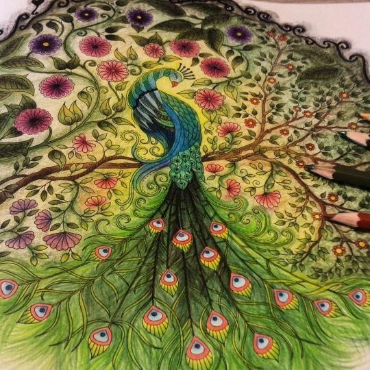 Johanna basford colorir gallery enchanted florest - Secret garden coloring book for adults pdf ...