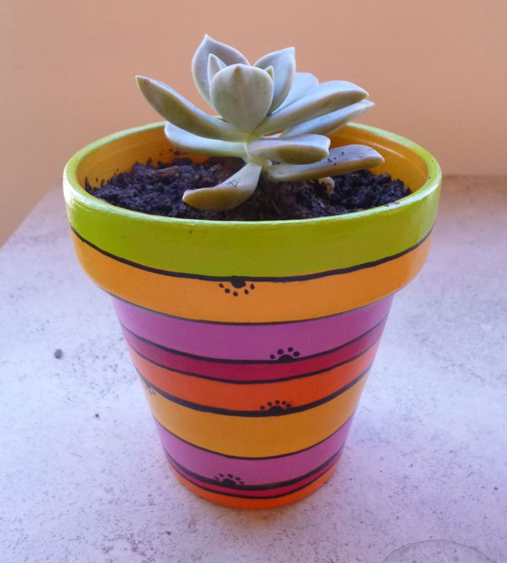 17 best images about macetas cactus on pinterest - Cactus en macetas pequenas ...