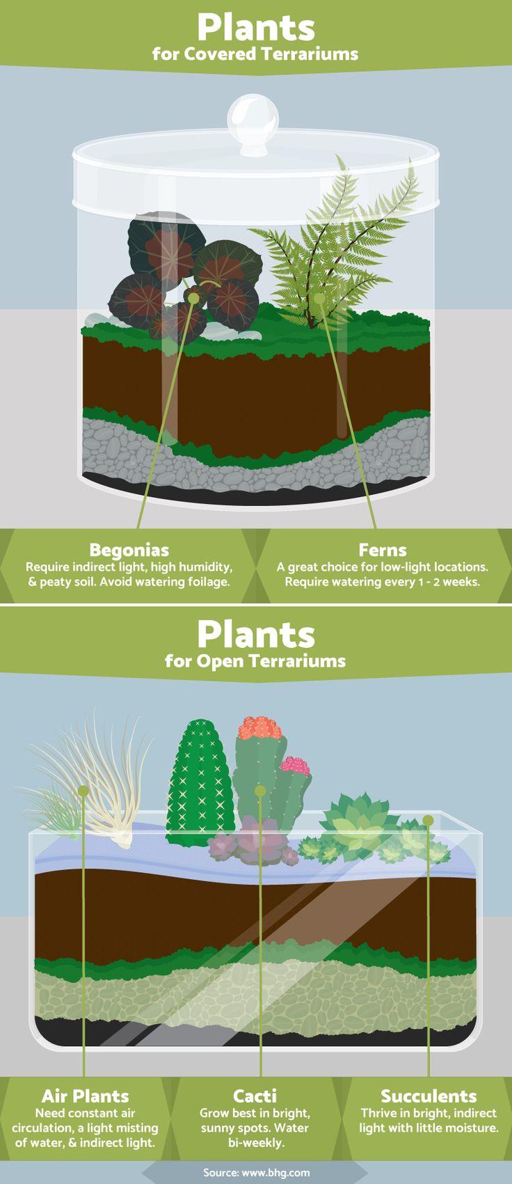 best 10+ terrarium plants ideas on pinterest | terrarium ideas