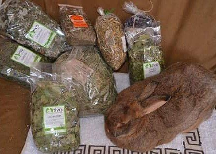 More e gifts :D @malgosiasrabbitshelter #Hase #Kaninchen #кроль #whiterabbit #兔子 #králík #kanin #jänis #lapin #κουνέλι #kelinci #conejo #ウサギ #兎 #うさぎ #doadopcji #nofilter #króliczek #krolik #l4l #like4like #likeforlike #rabbit #rabbits #bunny #bunnies #rescue