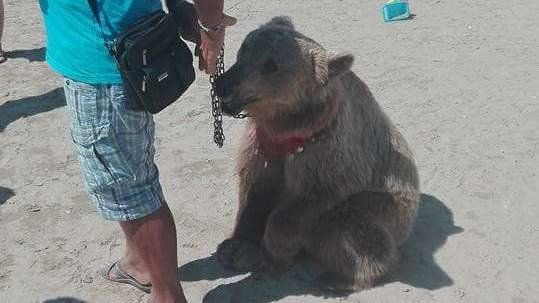 Petition · WWF: CUCCIOLO DI ORSO AL GUINZAGLIO IN SPIAGGIA · Change.org // Friends, PLEASE SIGN AND SHARE TO HELP THIS POOR SUFFERING ANIMAL... THANK YOU SO MUCH!!!!!