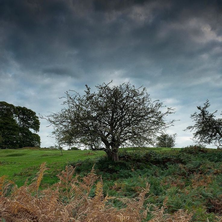 Tree at knole country park.  #countryside #kent #clouds #nationaltrust #landscapephotography