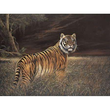 Splendor in the Grass Canvas Art - Ruane Manning (22 x 28)