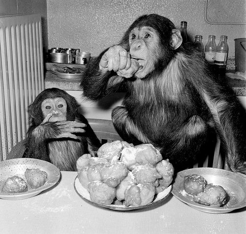 All sizes   Chimpansees Hilda en Tilly uit Artis, via Flickr.
