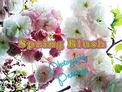 FLOWERSCAPE: http://www.photographypassions.xyz/2015/10/smart-phone-photography-spring-flush.html