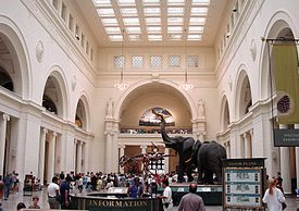 I adore the Field Museum.  I've been there many times but I'm always fascinated by the Egypt, Native American, and evolution exhibits.