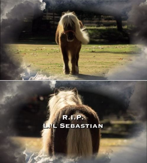 """""""I have cried twice in my life. Once when I was seven and I was hit by a school bus. And then again when I heard that Li'l Sebastian had passed."""" - Ron Swanson"""