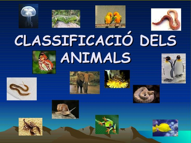 Classificació dels animals by SerradePrades via slideshare