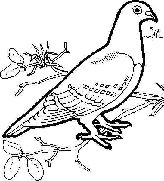 pretty bird coloring pages - beautiful birds coloring pages coloring pages