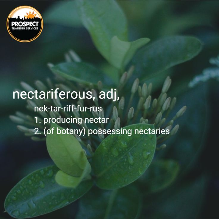Wishing you a nectariferous weekend Gloucestershire! Get creating, and make the most of it! #WordOfTheWeek