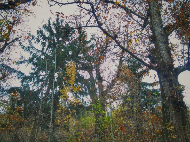 Autumn in Italy 2 (Vallecamonica, Brescia - Lombardia )