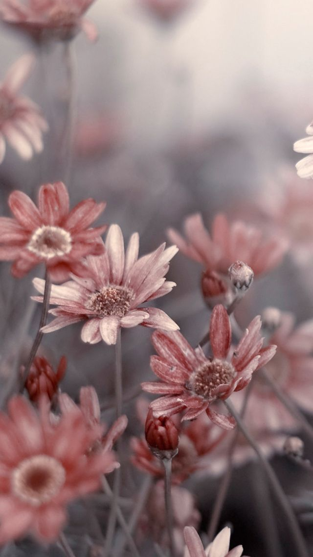 399 best images about phone backgrounds on pinterest - Flower boy wallpaper iphone x ...