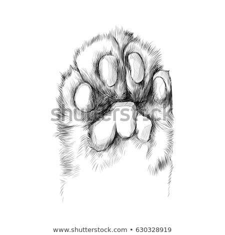 Katzentatze Mit Den Auflagen Hochgezogen Skizze Vektorgrafiken Schwarz Weiss Zeichnung Tattoo S Katzen Tattoo Silhouette Katze Zeichnen Tierzeichnung