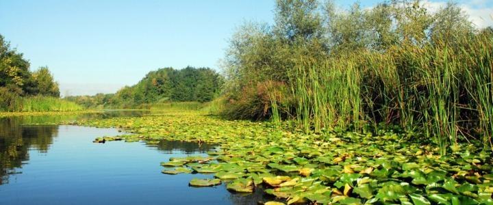 Acarlar Gölü (Longoz) : Dünyada beş tane bulunan ve Türkiye de ki ikinci Longoz olan (su basar ormanı) Acarlar Longozu hem flora hem fauna açısından son derece zengindir.Yaklaşık 10 km. uzunluğundaki Acarlar Longozun da, 150'den fazla ağaç türü yaşıyor.