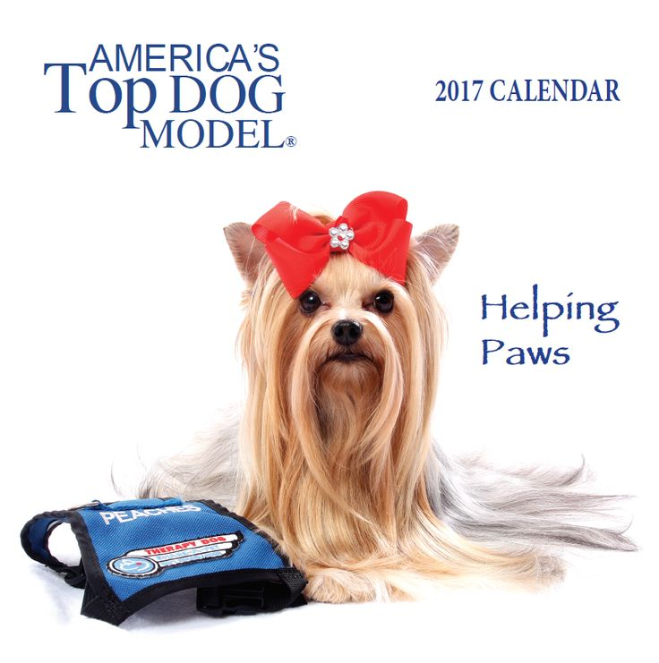 America's Top Dog Model Contest