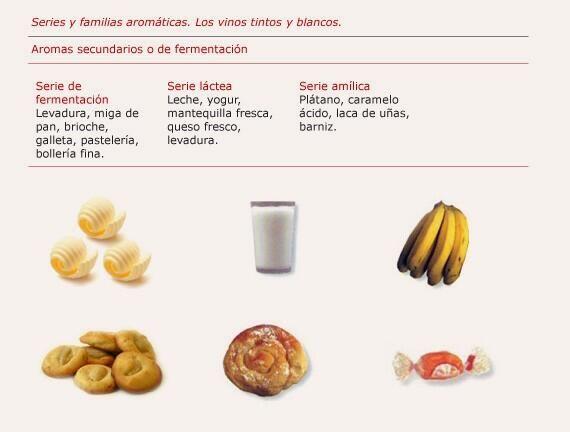 Aromas secundarios o de fermentacion