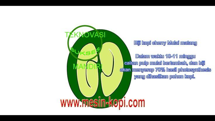 19 best mesin kopi images on pinterest coffee beans agriculture proses perkembangan biji kopi ccuart Images