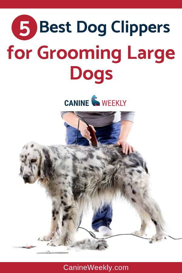 5 Best Dog Grooming Clippers For 2020 Updated Reviews With