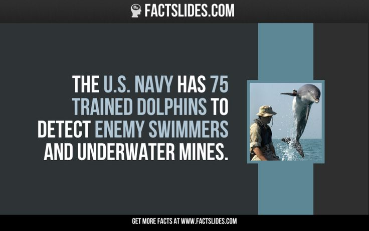 The U.S. Navy has 75 trained dolphins to detect enemy swimmers and underwater mines.