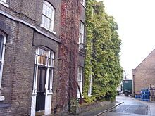 Fuller's Brewery - The wisteria plant at the Griffin brewery 2008.