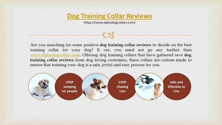 dog training collar reviews :-  One of the best things about this collar is that it doesn't take away the freedom of your dog. With a large coverage range and longevity, this makes sure that your dog is not deprived of his own share of fun, while ensuring that you have complete control over his unwanted activities in an efficient manner. have a look at alphadogcollars.com for more updates ..