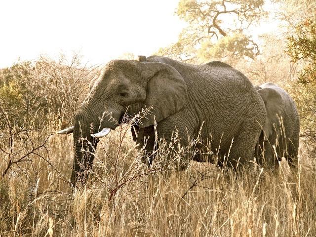 Elephants: Bela Bela, South Africa