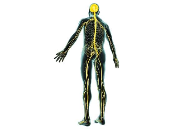 Beschadigde zenuwen supersnel hersteld  Onderzoekers uit Texas hebben een methode ontwikkeld om beschadigde zenuwen te repareren.  Als zenuwen bij een ongeluk beschadigd raken, kan dit tot verlamming of verminderde gevoeligheid leiden. Als het meezit, herstelt een kapotte zenuw zichzelf heel langzaam, of kan een chirurg ingrijpen. Maar in beide gevallen krijgt een zenuw niet vaak zijn volledige functionaliteit terug.