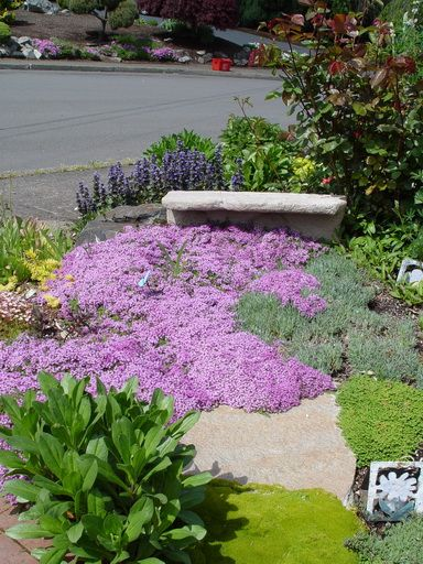 34 best images about Curbside Parkway Landscaping on ...