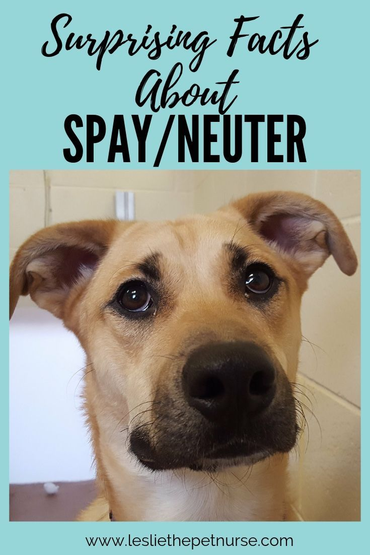 Spaying Or Neutering Is The One Single Greatest Thing We Can Do