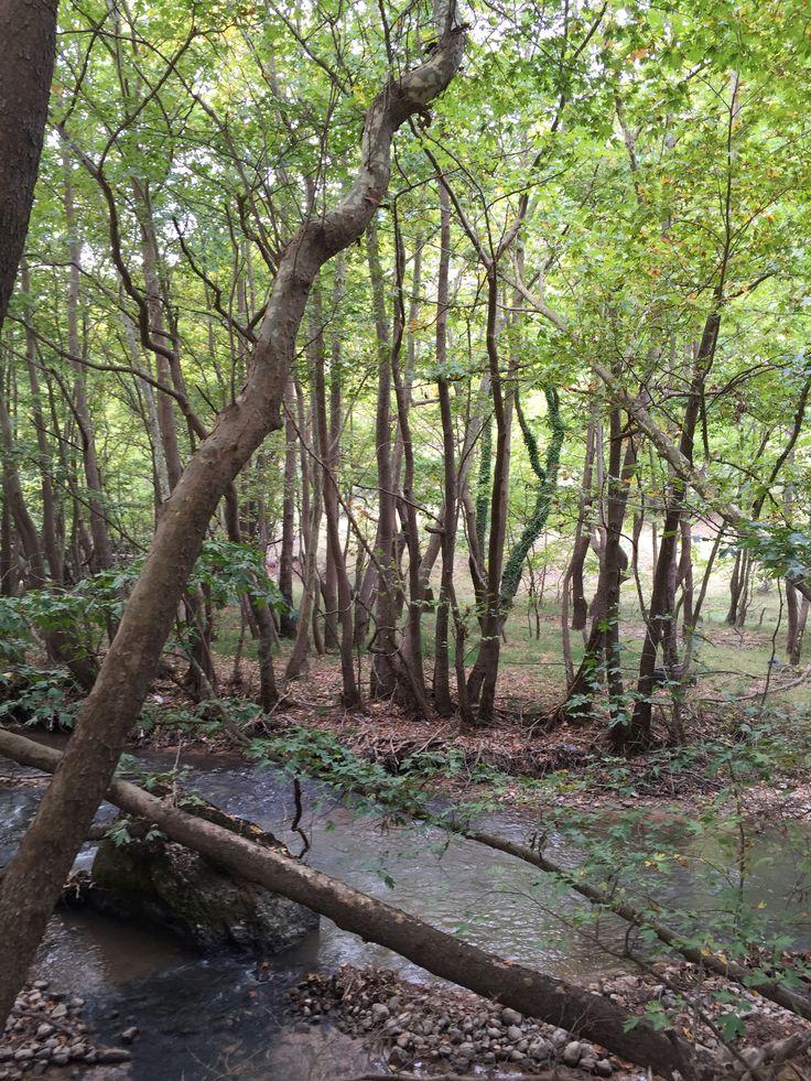 24b. Forest river landscape.   Kalavrita, Greece (Zachlorou area)