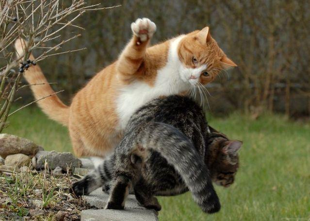 Cara Ampuh!!! Mengobati Abses Pada Kucing