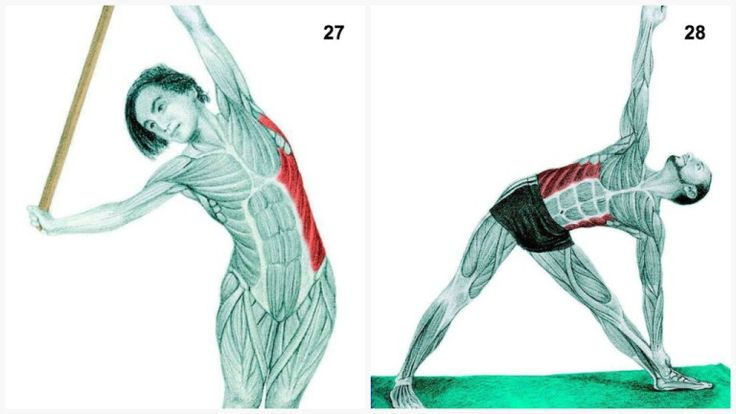 25. Lateral Flexion at the Wall Muscles Highlighted: External Obliques.While keeping your spine long slowly push your hips out the side. Avoid this stretch if you have lower back problems. 26.Supine Twist Muscles Highlighted: Glutes and External Obliques.This is a great stretch for those trying to manage Sciatic Pain. Start by lying flat on your …