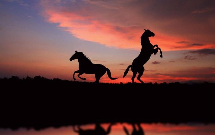 horse silhouettes in the sunset light wallpaper
