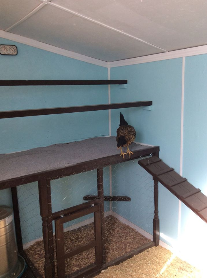Roosts over poop board with introduction cage underneath on one side and food and water on the other.