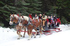 Tenaya Lodge; Horse Drawn Sleigh Rides.  I can't wait to go back!