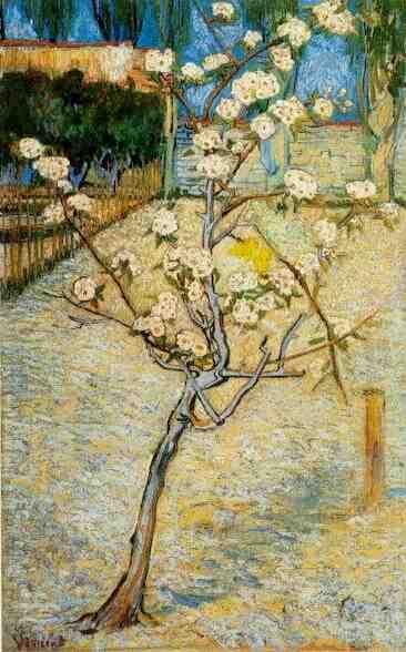 Florecimiento del árbol de pera    Óleo sobre lienzo  73,0 x 46,0 cm.  Arles: Abril, 1888      Amsterdam: Van Gogh Museum